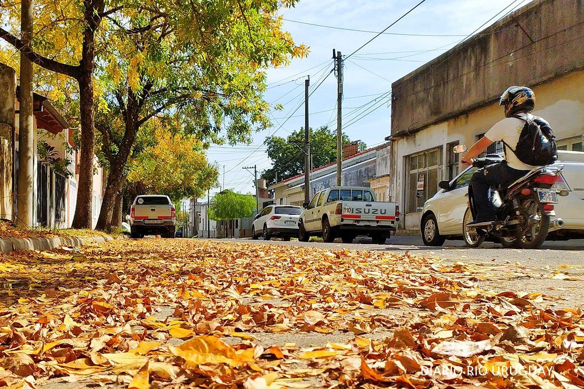 Alfombra de calle Aristóbulo del Valle