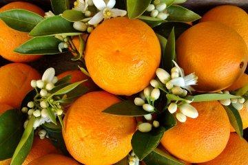 Bordet estuvo con Obama y reiteró su objetivo de que el citrus ingrese a los EE UU