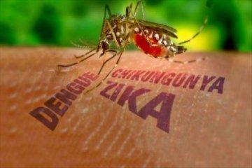 Las lluvias aumentaron la población de mosquitos aedes aegypti en Salto