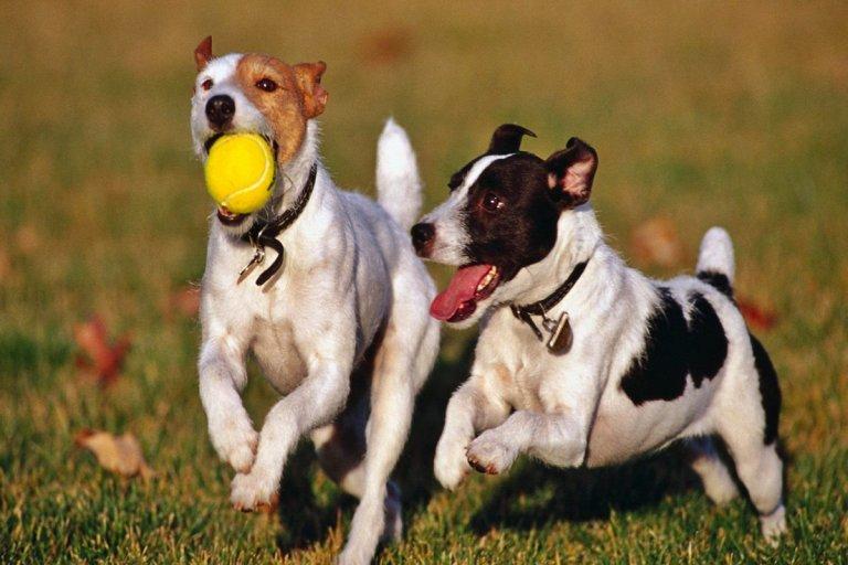Buscan regular la compra venta de perros a través de una ordenanza