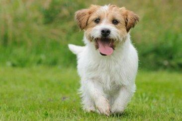 Aclaran algunos conceptos sobre la relación entre el coronavirus y las mascotas