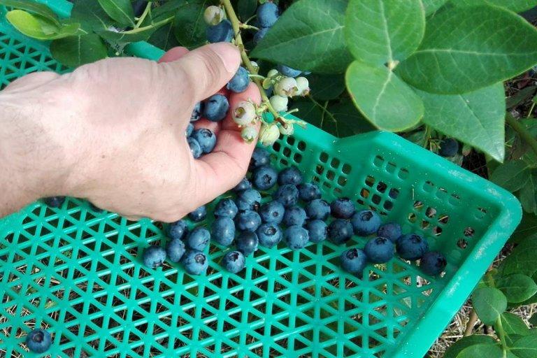 Los productores locales deben competir con sus pares peruanos