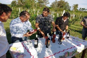 Federación también se suma al retorno de la vinicultura a la región