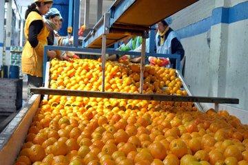 El citrus de la zona viajará a Dubai para ganar mercados