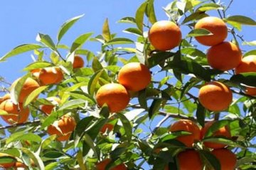 Concejales le reclaman a Galimberti que proteja la producción de Chajarí