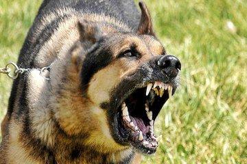 Un perro atacó ferozmente a su propietaria y a la hija
