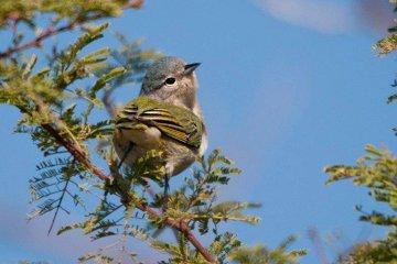 Un concordiense fotografió un ave que no figuraba en la fauna de Entre Ríos
