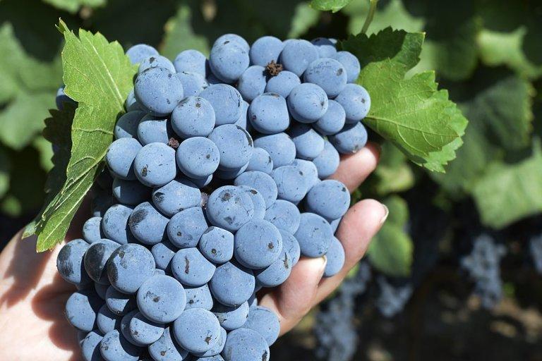 En La Criolla se rescata y reescribe la historia vitivinícola de Concordia