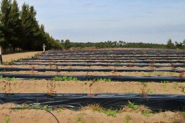 Expertos internacionales brindaron una capacitación para la protección fitosanitaria del arándano