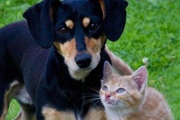 Entró en vigencia la ley de tenencia responsable de animales domésticos