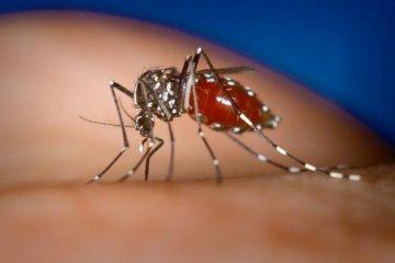 Un primer informe reveló que no se registran huevos de dengue a esta altura del año