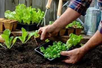 Llega la segunda edición del Ciclo de Charlas sobre Huertas Agroecológicas
