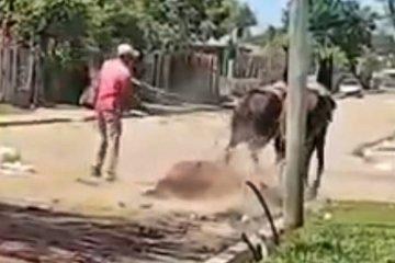 VIDEO: Se le murió un caballo en la calle y lo arrastró con otros dos