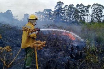 Bomberos trabajan para controlar un importante incendio forestal