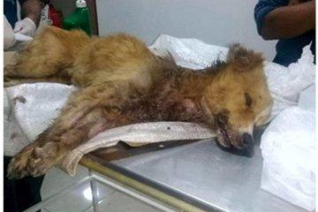Murió el perro que había sido abandonado con las patas atadas y muy lastimado