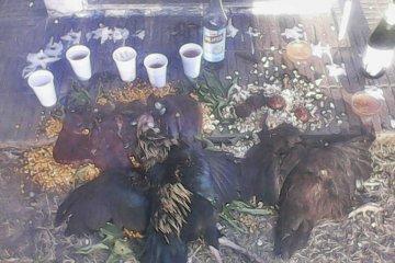 Vecinos de La Criolla denuncian la presencia de restos de rituales en pleno cementerio
