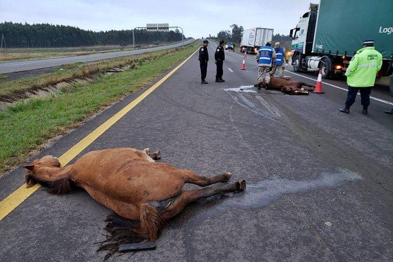 Los animales yacen en el asfalto de la ruta 14
