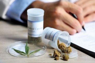 Destacan que la regulación ayudará al uso medicinal del cannabis y redundará en mejores tratamientos