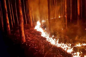 Bomberos Voluntarios debió sofocar un incendio forestal en plena madrugada