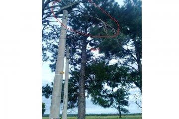 Una rama cayó sobre los cables y produjo un corte de energía