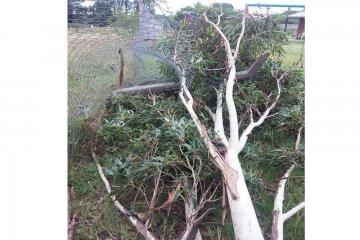 Cayó una pesada rama de árbol y rompió el tejido de un CDI