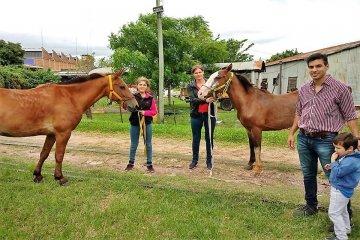 Dos caballos recuperados del TAS encontraron un nuevo hogar