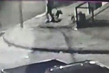 VIDEO: Brutal ataque de un pitbull a una perrita que jugaba con un niño
