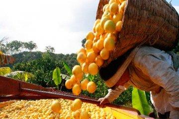 La emergencia citrícola podría convertirse en ley la semana próxima