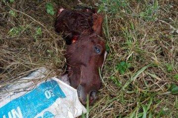 """Vecinos hallaron restos de un caballo que habría sido """"carneado"""""""