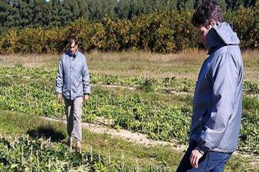 Decomisaron 4200 plantas cítricas producidas a cielo abierto en La Criolla