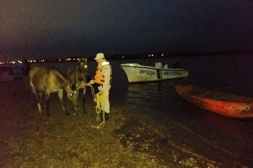 Prefectura Concordia interceptó un bote que trasladaba caballos a nado por el Río Uruguay