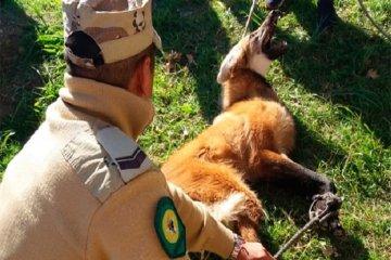 Una especie en peligro de extinción fue capturada en plena avenida de una ciudad entrerriana