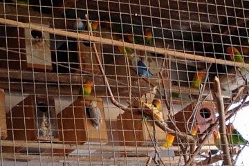 Secuestraron una importante cantidad de aves en cautiverio