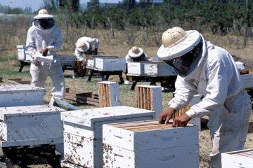 Cinco empresas entrerrianas fueron habilitadas para exportar miel a China