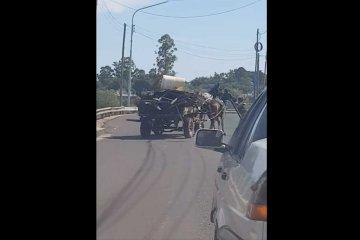 VIDEO: Dos caballos que tiraban de un carro casi provocan un accidente en el Puente Alvear
