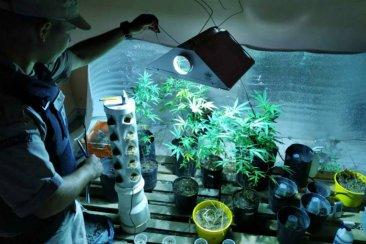 Prefectura desmanteló dos habitaciones destinadas al autocultivo de marihuana