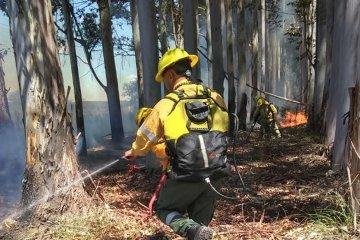 Bomberos debieron sofocar un incendio desatado en zona de pastizales