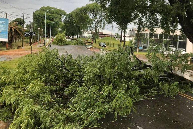 Arboles caídos sobre avenida Perón
