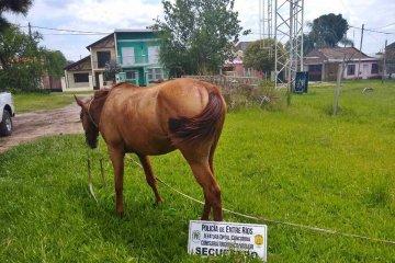 La policía pudo recuperar un caballo robado