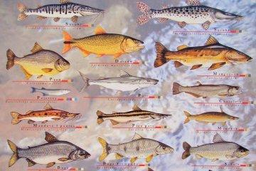 Las pescaderías deben enseñar a sus clientes cuales son los tamaños mínimos para cada especie
