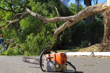 Cayó gran parte de un árbol y obstruyó la normal circulación por una avenida de la ciudad