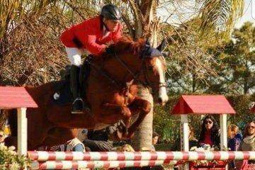 Los problemas que ocasionaba la falta de actividad a los caballos preparados para la equitación