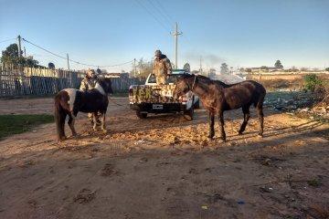 Recuperan dos caballos robados que se encontraban en una finca concordiense
