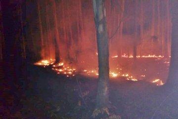 Las llamas consumieron seis hectáreas de una forestación ubicada en Colonia Yeruá