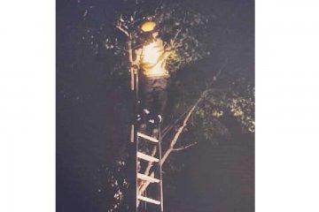 Se subió a un árbol de más de 6 metros para bajar a un gato y tuvieron que bajarla los bomberos