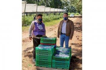 Autoridades recorrieron los campos arandaneros de Concordia buscando prevenir el trabajo infantil