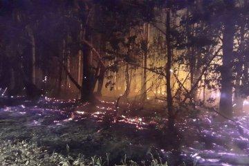 Bomberos combatieron un incendio forestal de gran magnitud
