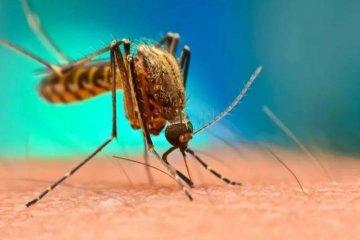 Dos federaenses fueron derivadas a Concordia tras contraer dengue