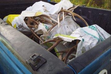 Transportaban en una camioneta más de 60 kilos de astas de ciervo