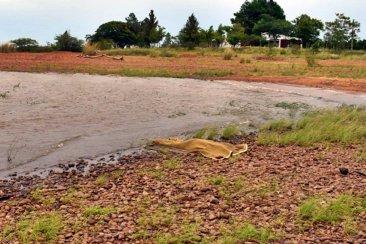 Investigan el ahogamiento de una mujer en el lago de Salto Grande